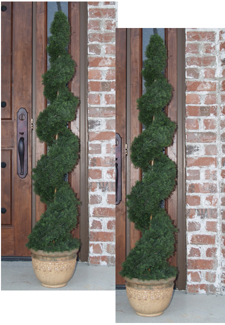 5 Cypress Spiral Topiary Tree Set Of 2 Tp2 5cy 160